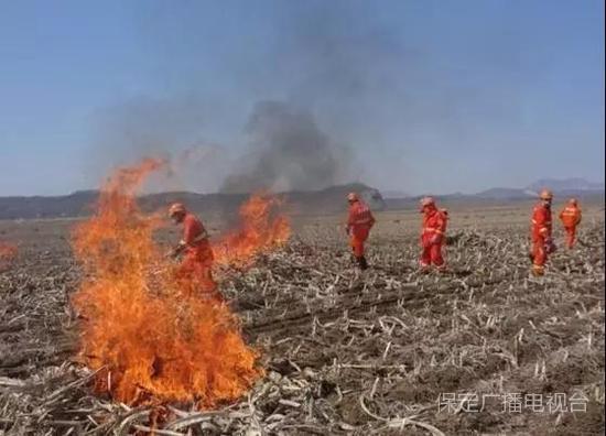 大保定人注意:麦子熟了 秸秆焚烧使不得